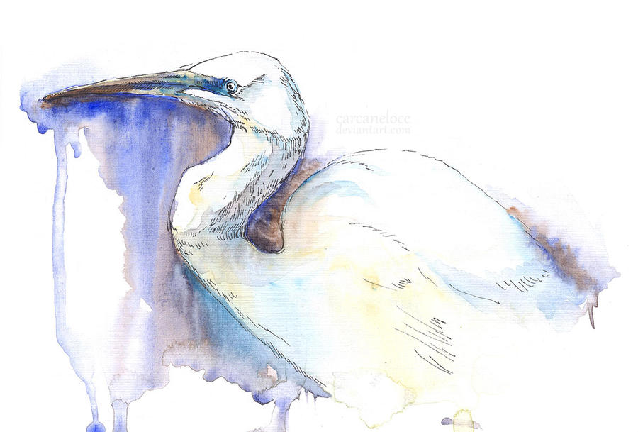 Great Egret (Sketch) by Carcaneloce