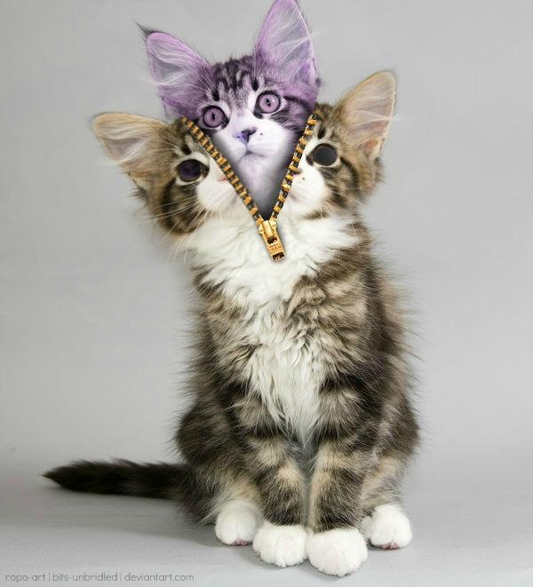 kitty video