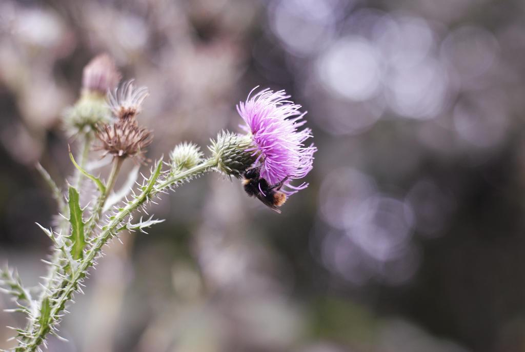 Purple by ColoreesVie