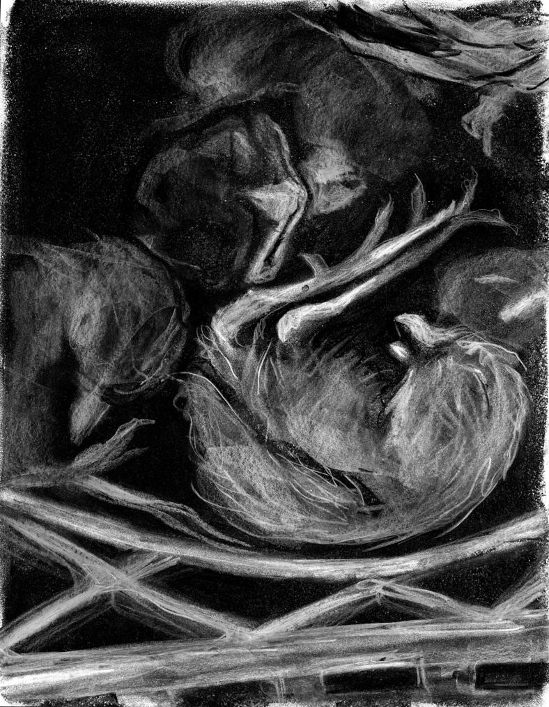 birds by ungoth
