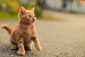 Cat by mrhenrik