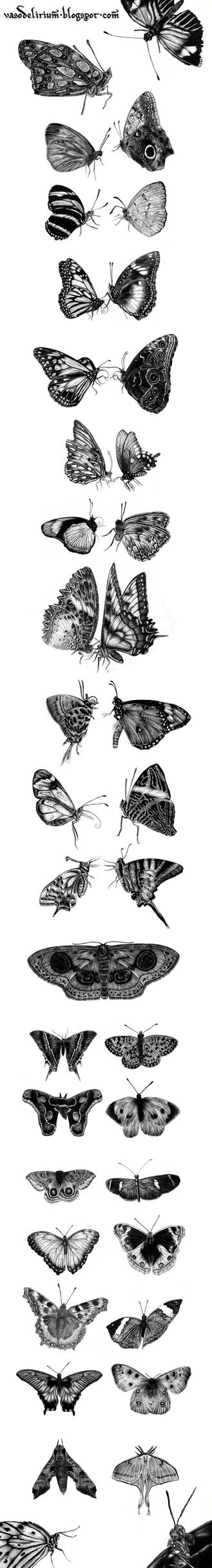 butterfly project by vasodelirium