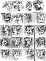 kitty calendar-january by vasodelirium