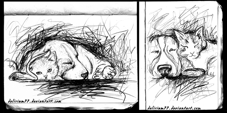 kitty studies by vasodelirium