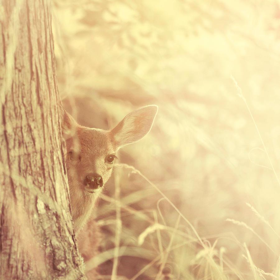 Shy by Kamik636