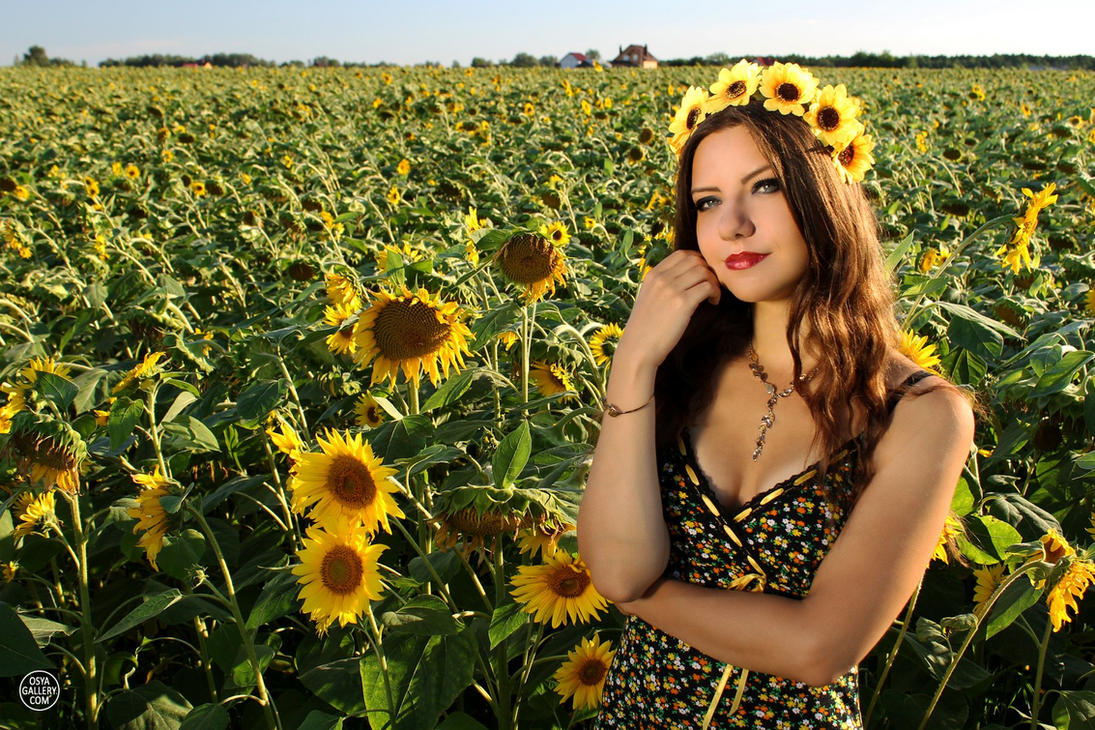 Sunflowers 5 by Enolla