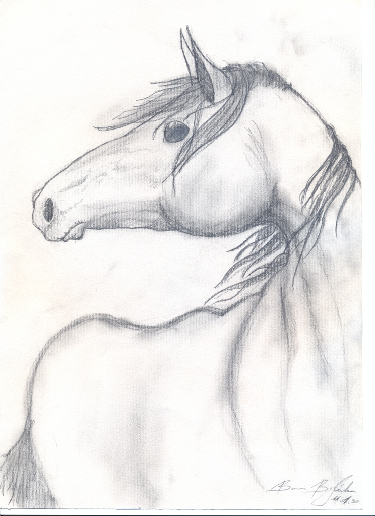 White Mustang Horse Drawing Horse Mustang Drawing Black