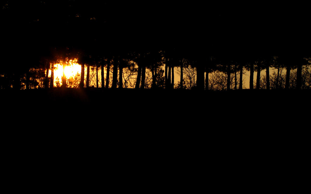 .:In The Dark:. by farhadvm