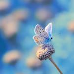 Blue August by farhadvm