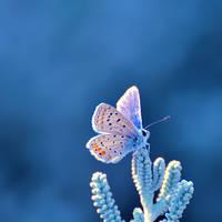 Blue August II by farhadvm
