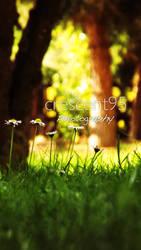 Dreamlike Garden by crescent95