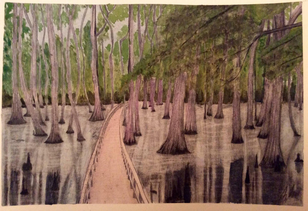 Cypress on the trace by Brewskgar
