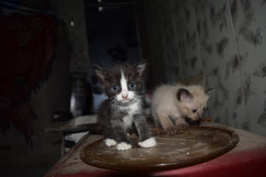 2 Kittens by elixa-geg