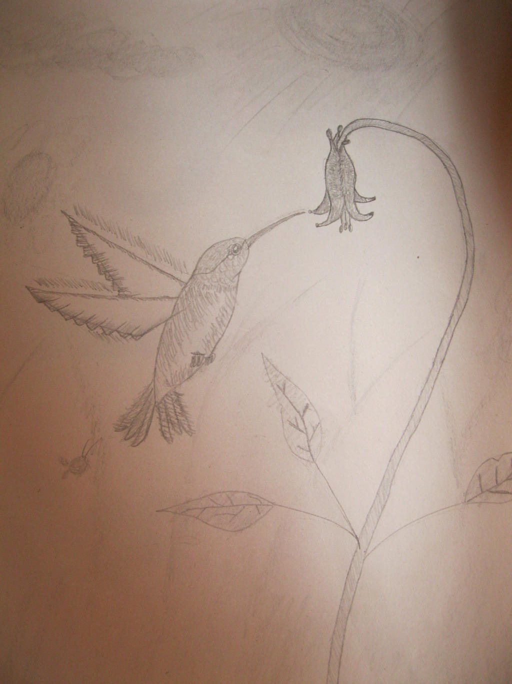 Pin Hummingbird Flower Gallery on Pinterest