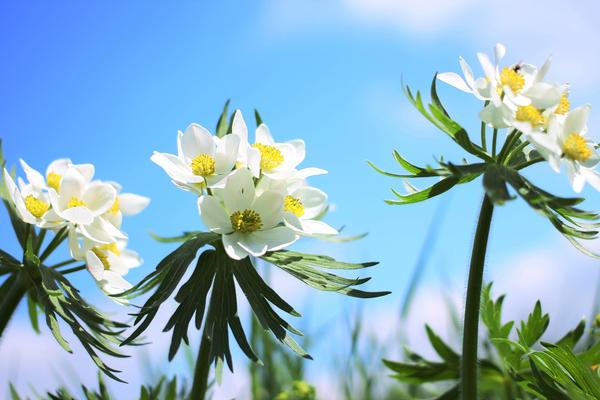 flowers 8 by Anarda2