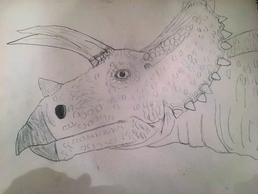 My Triceratops drawing by Dracorider19