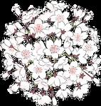 Flores [PNG Random] 9