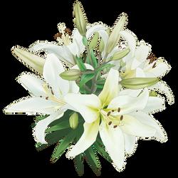 Flor - [PNG Random] 13 by Keary23