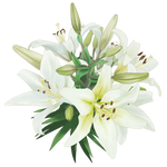 Flor - [PNG Random] 13