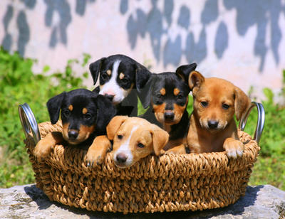 Basket full of big trouble by PatriciaVazquez