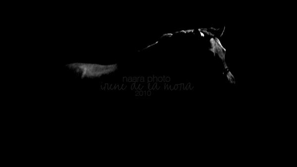 Fotografía Artística - Página 5 Poesia_eres_tu__by_naaraphoto-d2yd5ca