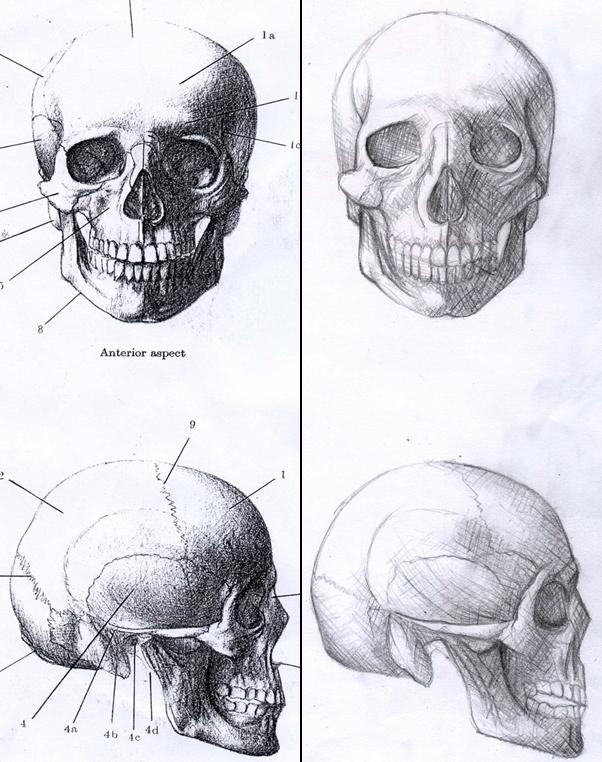 Skulls by Zaratulah