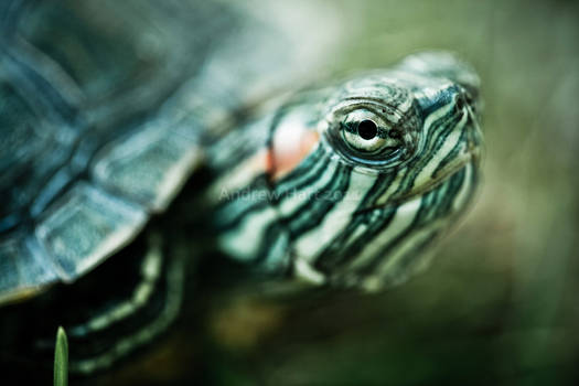 Turtilla by KeepWaiting