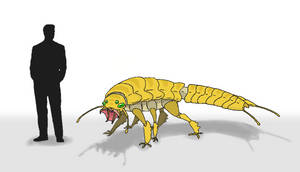 Beetle Tiger