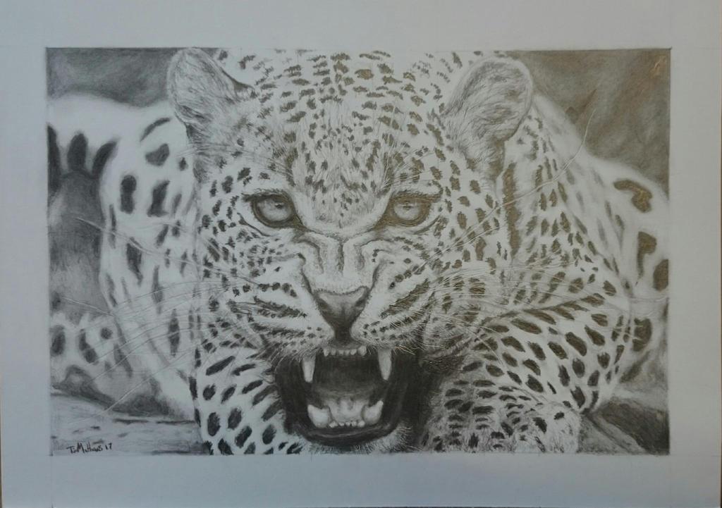 Leopard  by timdiesel09
