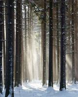 winter by verdas