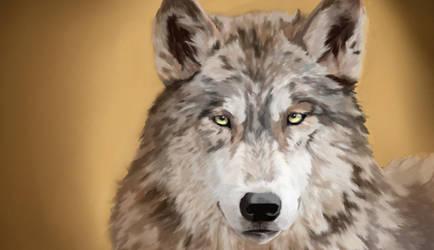 Wolf by SeitenTaiseiKira
