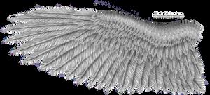 Grey Eagle Wing