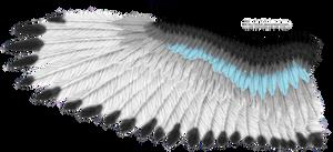 Blue Stripe Eagle Wing