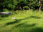 Bunny 1 by K1ku-Stock