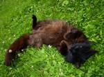 Black Cat 3 by K1ku-Stock