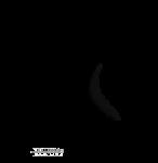 Transparent Black Wing