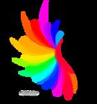 Transparent Rainbow Wing