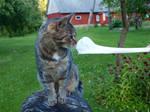Tabby on a Stump 09 by K1ku-Stock