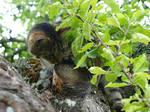 Cat Has Climbed the Tree 1 by K1ku-Stock