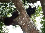 Black Cat in a Tree 3 by K1ku-Stock