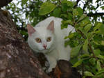 White Cat in a Tree 02 by K1ku-Stock