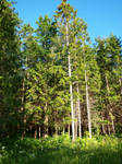 Forest Behind Granny's House 02 by K1ku-Stock