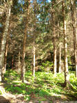 Forest Behind Granny's House 04 by K1ku-Stock