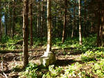 Forest Behind Granny's House 07 by K1ku-Stock