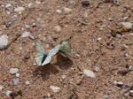 Butterfly Gathering 3 by K1ku-Stock