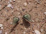 Butterfly Gathering 4 by K1ku-Stock