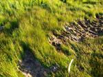 Beach Grass 1 by K1ku-Stock