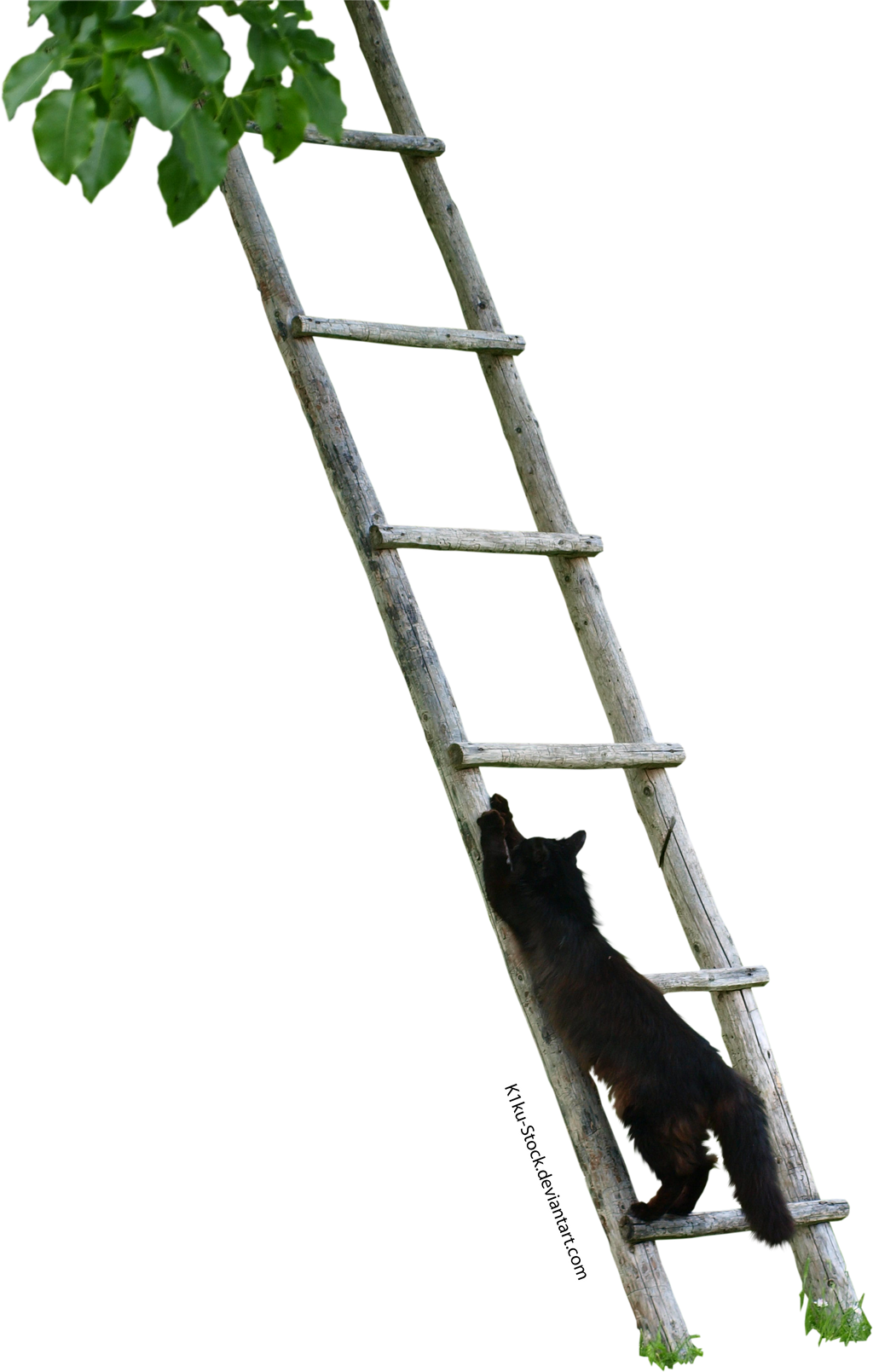 Black Cat Climbing a Ladder by K1ku-Stock