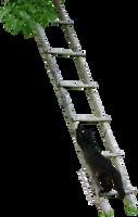Black Cat Climbing a Ladder by K1ku-Stock