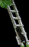 Black Cat Climbing a Ladder